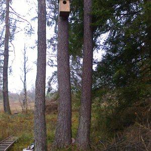 Der Waldkauz bevorzugt lichte Wälder und Feldgehölze mit angrenzenden freien Flächen