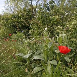 Garten2012-16