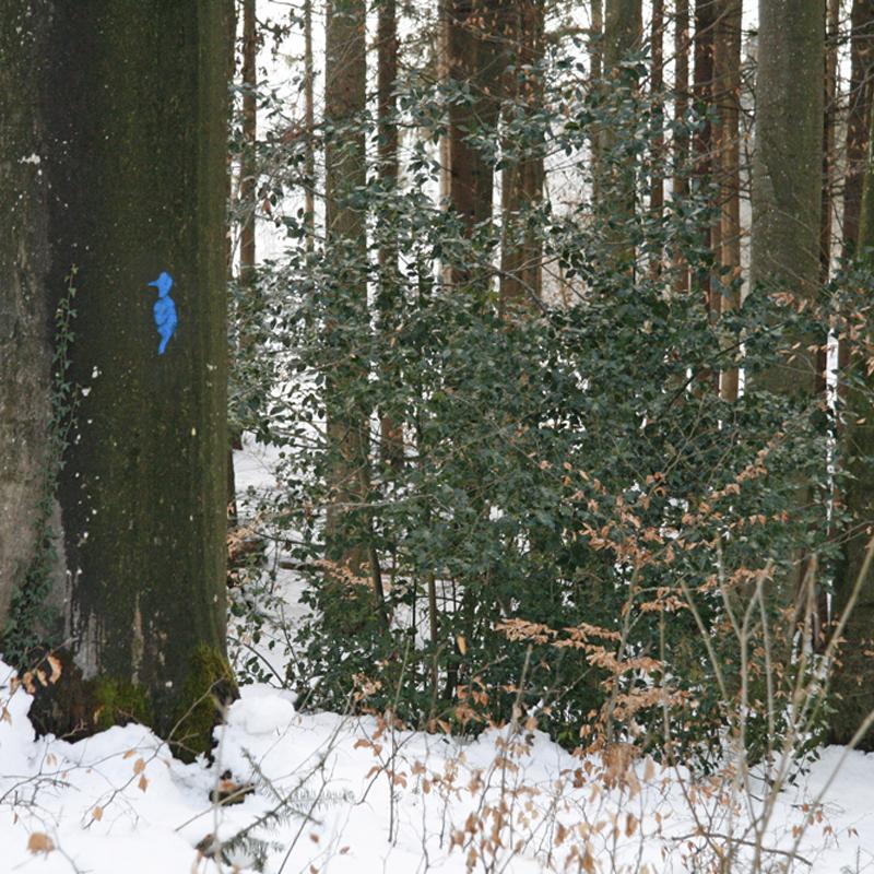 Markierter Baum mit Spechthöhle