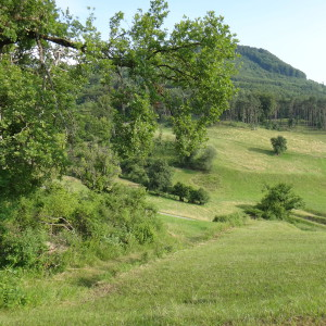 Lebensraum der Waldohreule
