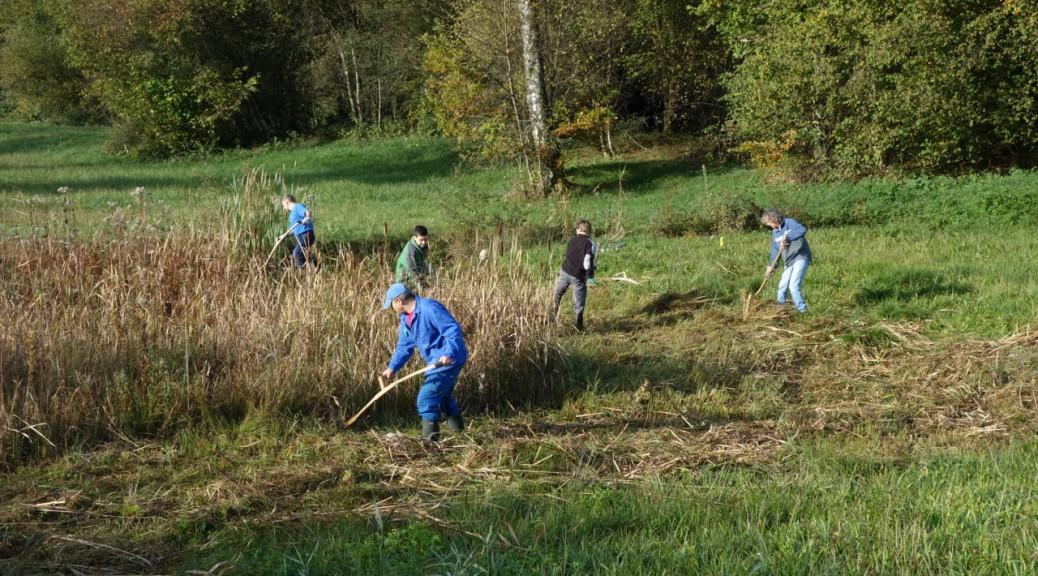 Pflegeeinsatz des Naturschutzes Illnau-Effretikon im Wildert (Foto: Barbara Leuthold)