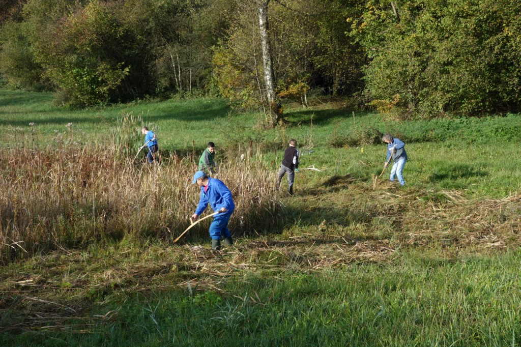 Arbeitseinsatz im WIldert (Photo: Beatrix Mühletaler)