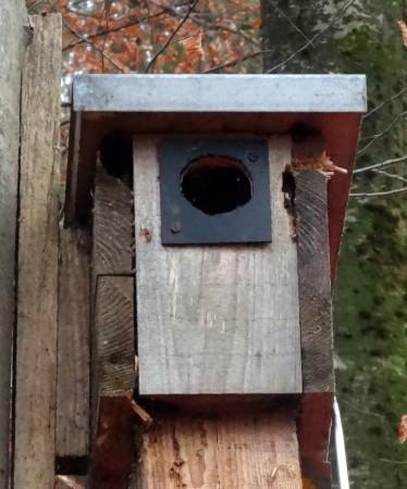 Auch in der Vogelwelt gibt es Rowdies, deren Schäden zwecks späterer Reparatur aufgenommen werden müssen