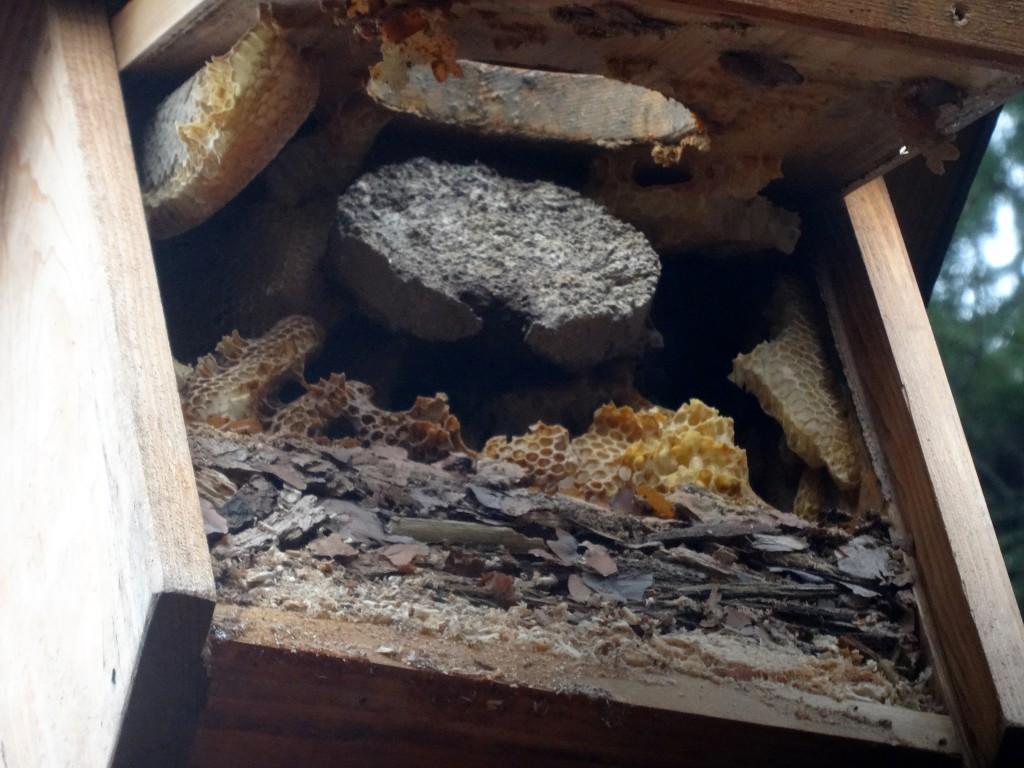 Kleiber und Bienen besetzen Eulennistkasten