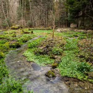 Die Wasserspitzmaus lebt an Gewässern mit unverbauten Ufern und sauberem Wasser. © Benoit Renevey