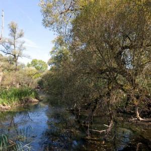 Pro Natura setzt sich ein für naturnahe, saubere Gewässer. © Matthias Sorg