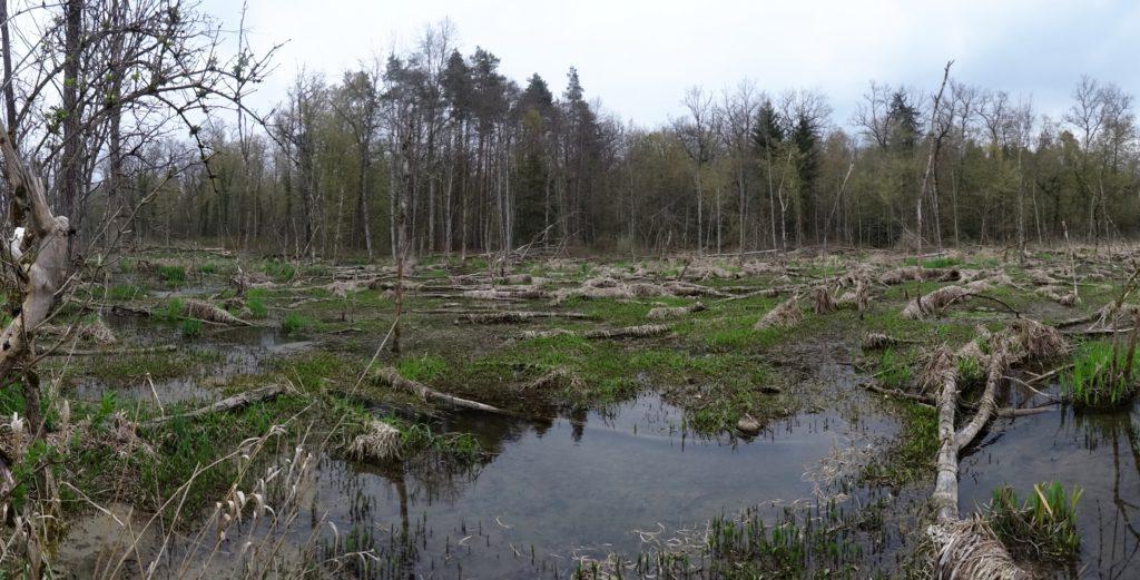 Der ehemalige Eichenwald liegt am Boden (Photo: Stefan Vogel)