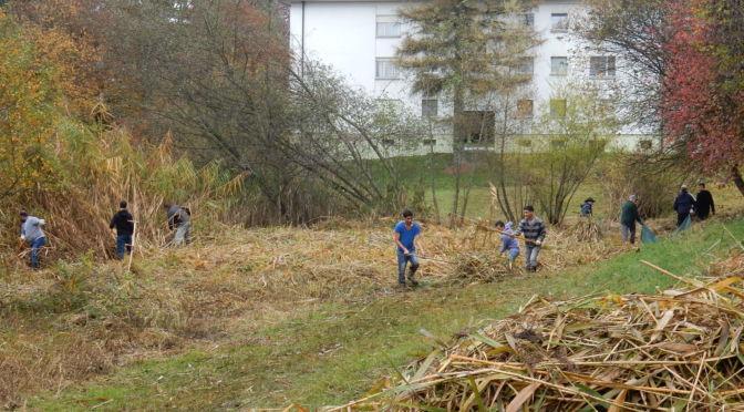 Die Grendelbachgruppe verstärkt durch Asylbewerber an der Arbeit