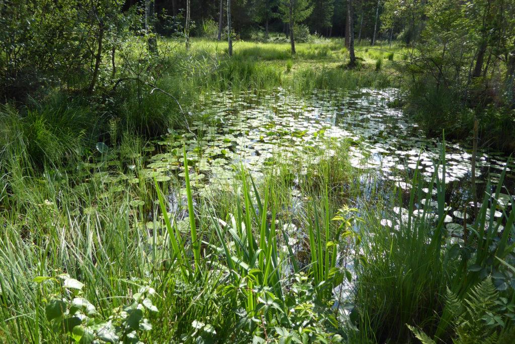 Tümpel im ausgelichteten Wald. Photo: Beatrix Mühletaler