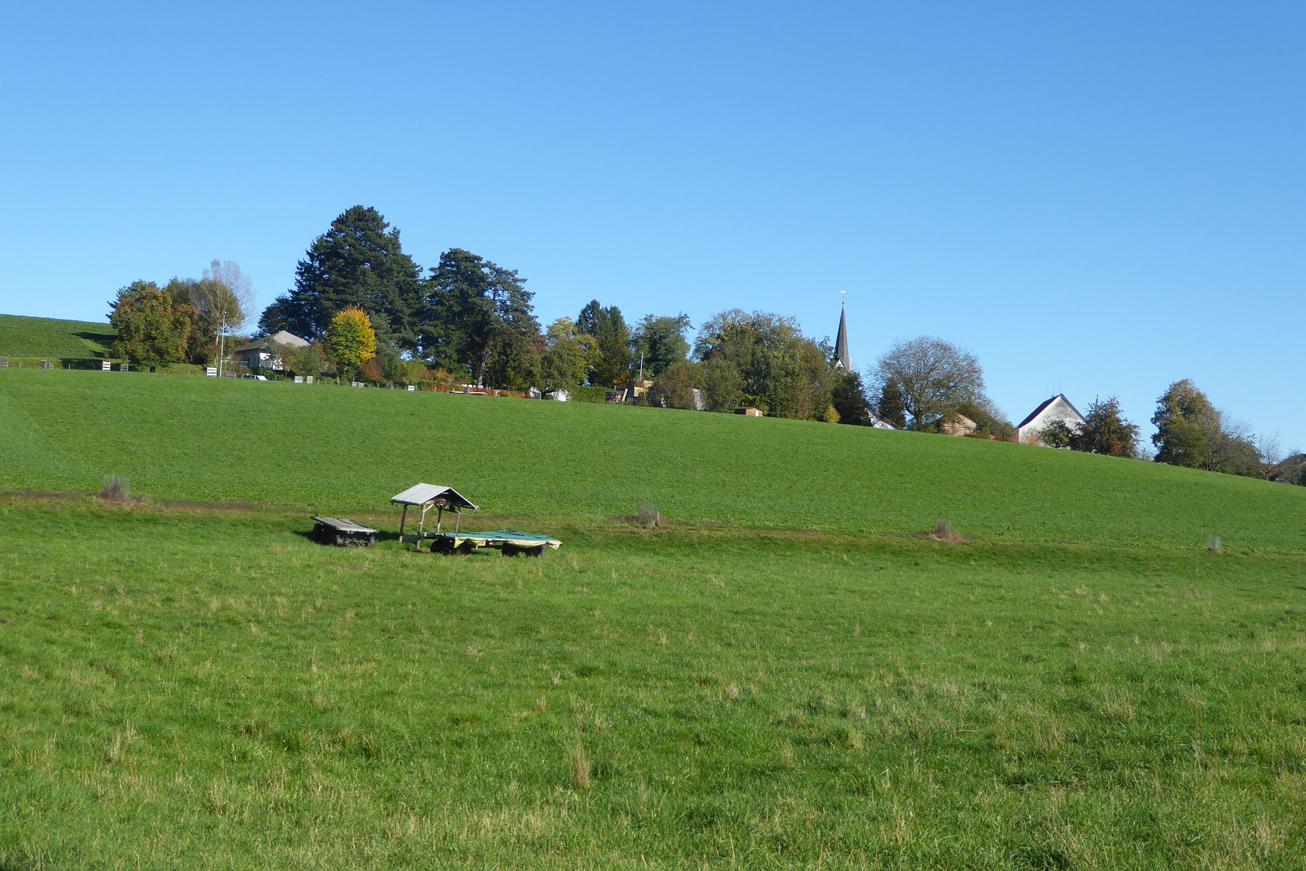 Hang im Herbst (Photo: Beatrix Mühlethaler)