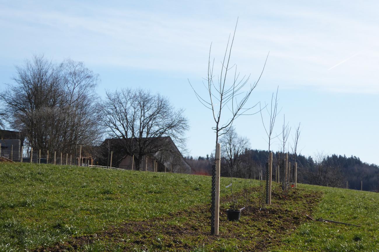 Bäumchen (Photo: Beatrix Mühlethaler)