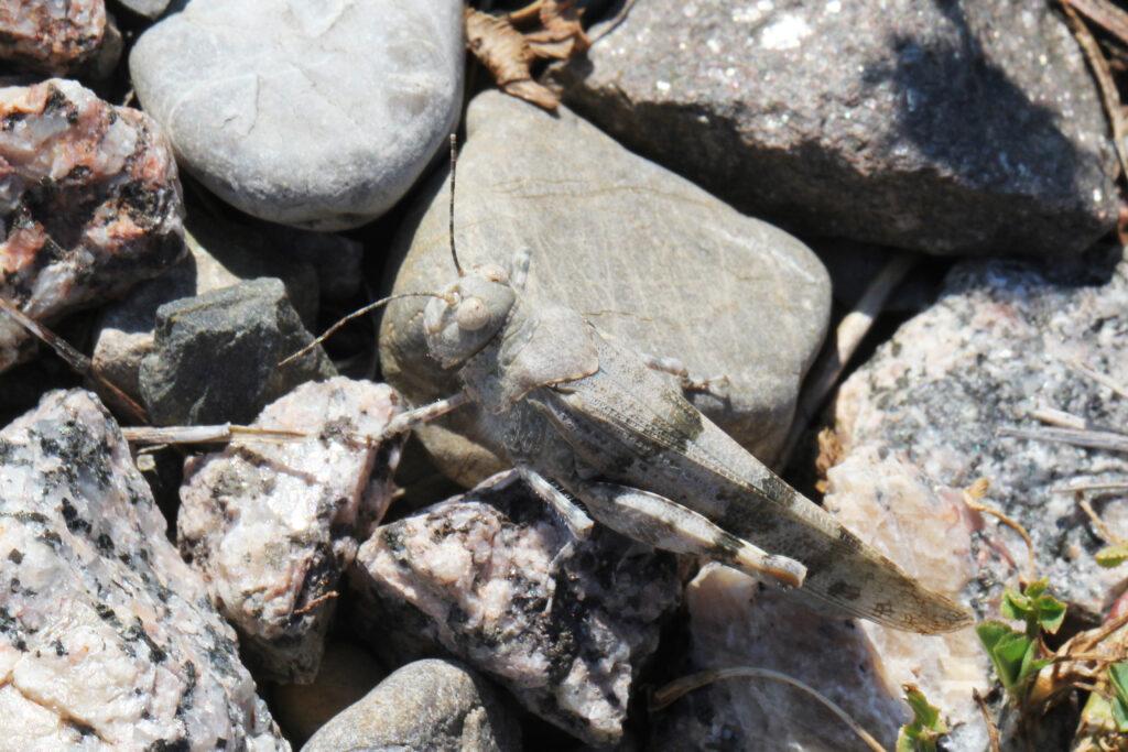 Sandschrecke